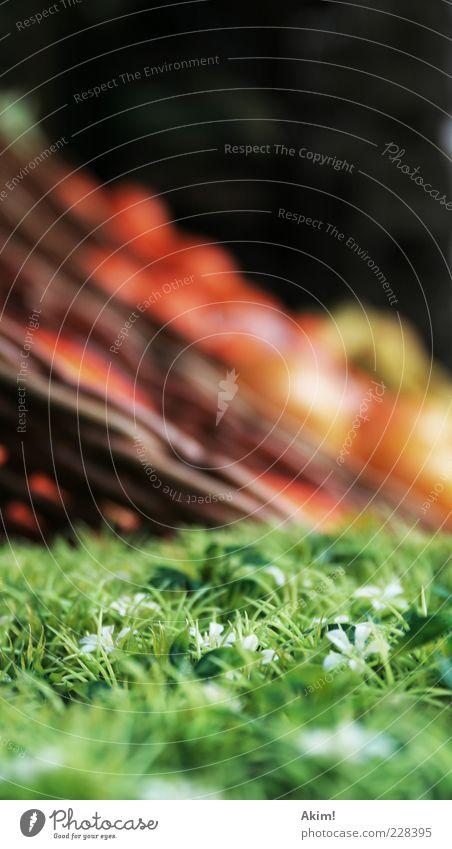 Grüne Welle Natur Sommer Umwelt Gras Frühling Gesundheit Frucht Klima Orange Ernährung Gesunde Ernährung weich genießen Bioprodukte Handel Korb