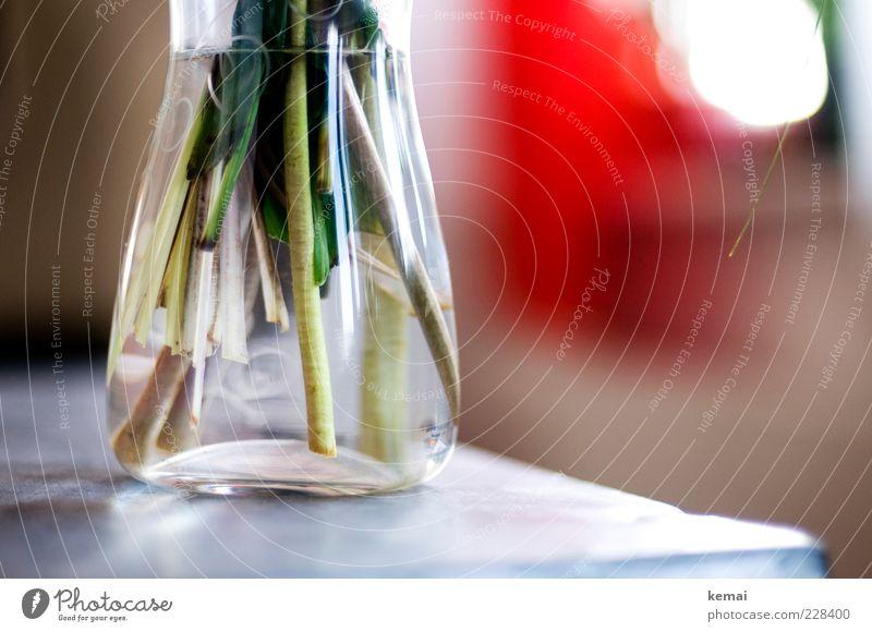 Glasvase Wohnung Dekoration & Verzierung Vase Blumenvase Behälter u. Gefäße Pflanze Grünpflanze Stengel stehen Wachstum hell nass grün durchsichtig Blumenstrauß