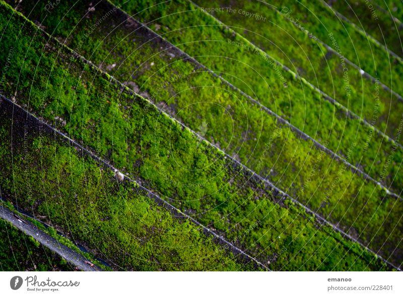 green lines Natur alt grün Pflanze kalt Wand oben Mauer Stein Linie nass Fassade Treppe Klima Wandel & Veränderung unten