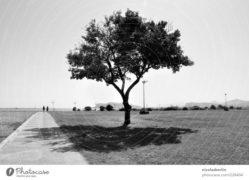 Today, You Inspired Me Baum Sommer Ferne Wiese Landschaft Wege & Pfade Küste Park Horizont Kraft ästhetisch Zukunft einzigartig Rasen Unendlichkeit Bucht