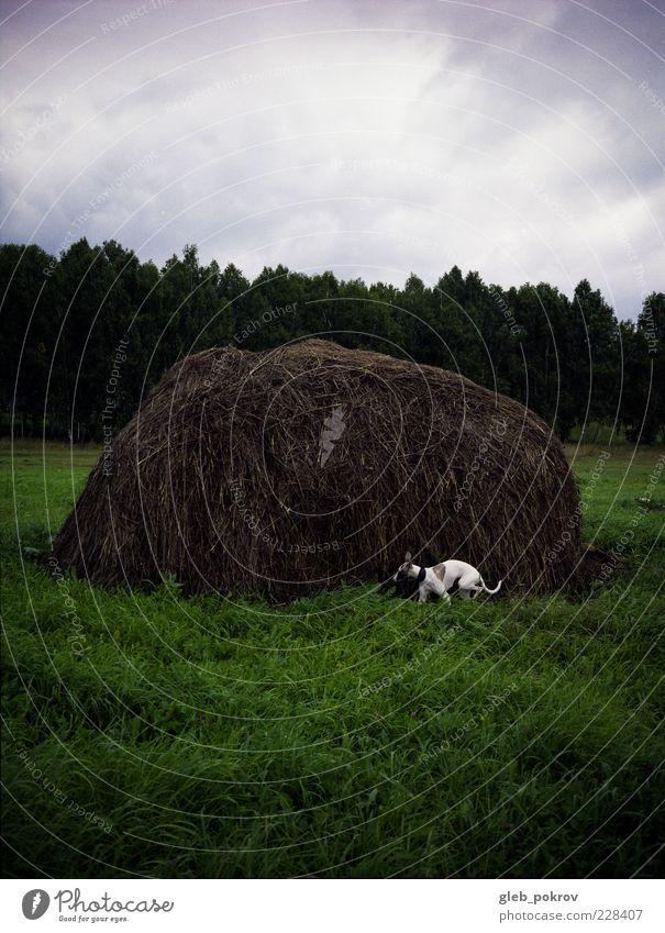 Hund Himmel weiß grün schön Baum Pflanze Tier Landschaft Bewegung Gras natürlich Geschwindigkeit gut Lifestyle Haustier