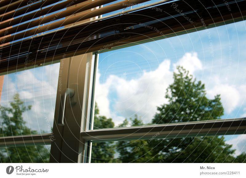 window in the skies Fenster Sauberkeit durchsichtig Fensterscheibe Rollo Jalousie geschlossen Sprossenfenster Glasscheibe Wolken Licht Schutz Farbfoto Baumkrone