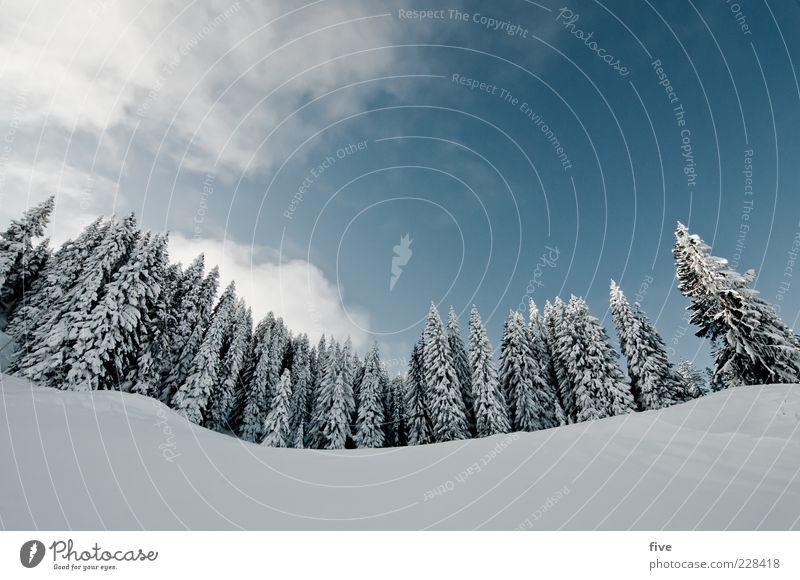 für carlitos mit objektivkorrektur Himmel Natur Pflanze Baum Wolken Winter Wald Berge u. Gebirge kalt Schnee Wetter Schönes Wetter Hügel Alpen Baumkrone
