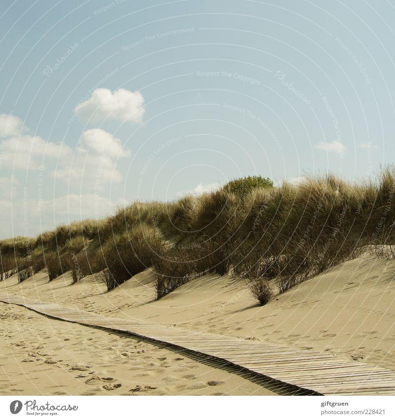auf dem holzweg Umwelt Natur Landschaft Pflanze Urelemente Sand Himmel Wolken Sommer Schönes Wetter Sträucher Grünpflanze Küste Strand Nordsee Meer Insel Düne