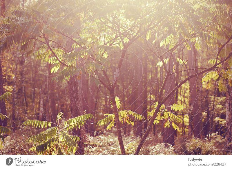 Sommersehnsucht harmonisch Umwelt Natur Landschaft Sonne Sonnenlicht Herbst Schönes Wetter Wärme Pflanze Baum Sträucher Wildpflanze Wald hell natürlich schön