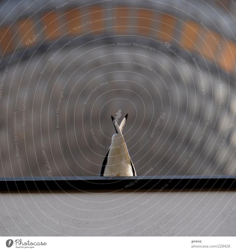 Fernsehturmmöwe weiß Tier Wand Umwelt grau Mauer Vogel Fassade Flügel Dach Feder Wahrzeichen Möwe Hauptstadt Sehenswürdigkeit Schwanz