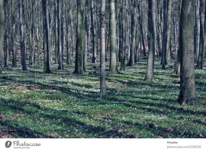 wald Natur Baum Pflanze Wald Wiese Umwelt Landschaft Frühling Zeichen Baumstamm