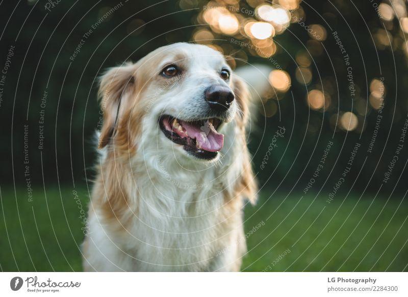Natur Hund Sommer grün weiß Tier gelb Gras klein Glück Spielen braun Freundschaft gold stehen Aktion