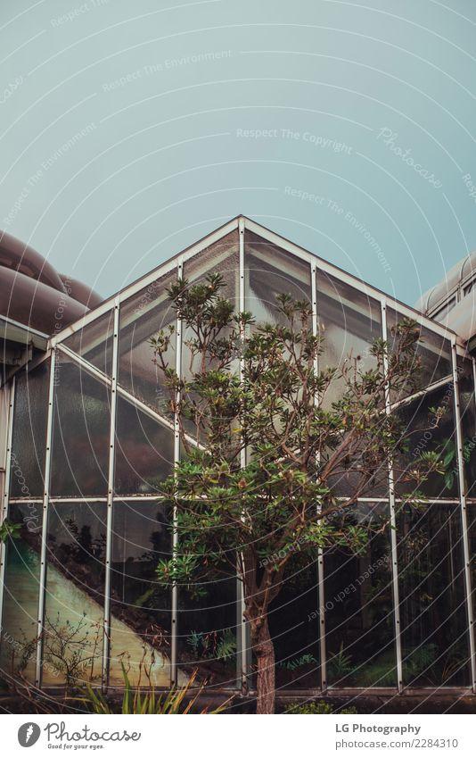 Baum vor dem Gewächshaus Stil Design schön Haus Garten Lampe Himmel Wolken Blüte Stadt Architektur Metall Stahl retro blau weiß Tradition Laternenpfahl