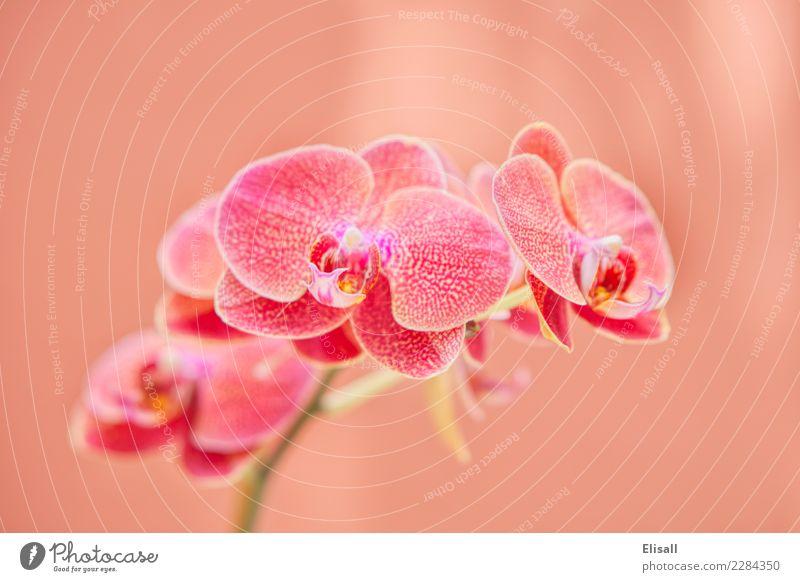 Tropische Orchideenpflanze Natur Pflanze elegant Orchideenblüte Botanik Pastellton exotisch tropisch Blume Blütenpflanze Garten Gartengeräte Außenaufnahme