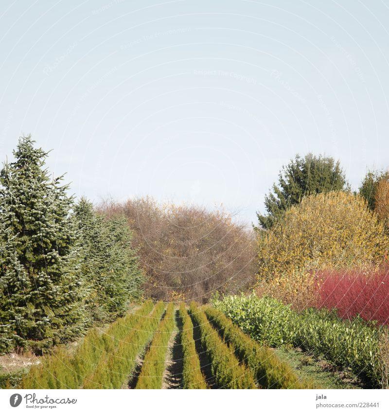 baumschule Natur Landschaft Pflanze Himmel Wolkenloser Himmel Baum Gras Sträucher Grünpflanze Garten Gärtnerei Baumschule Farbfoto Außenaufnahme Menschenleer