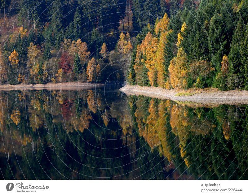 Indian Summer im Frankenwald Umwelt Natur Landschaft Pflanze Wasser Herbst Schönes Wetter Baum Wald Seeufer Stausee Deutschland Idylle Reflexion & Spiegelung