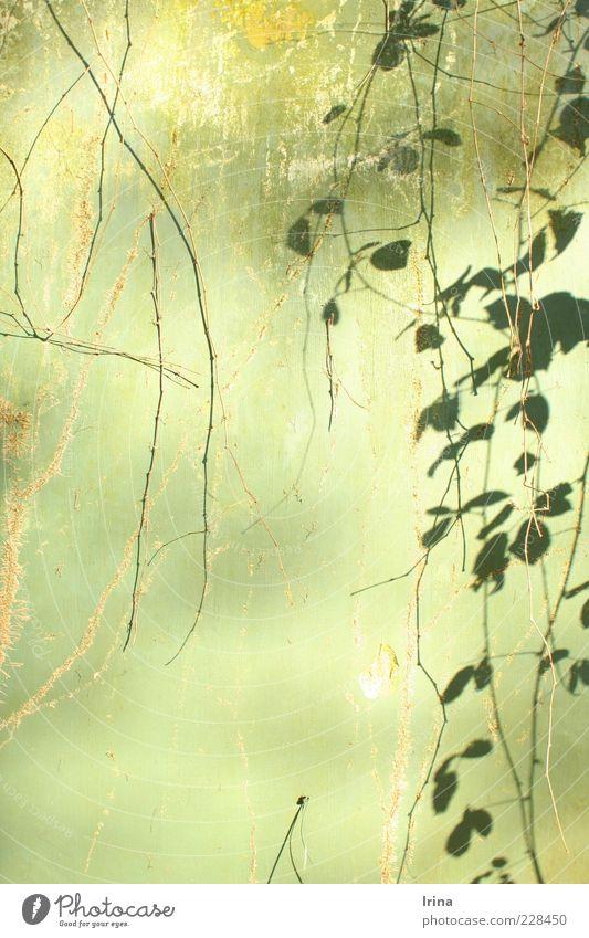 Mogli was here Natur alt grün Pflanze Blatt ästhetisch Wandel & Veränderung exotisch Efeu Ranke Zweige u. Äste Bochum