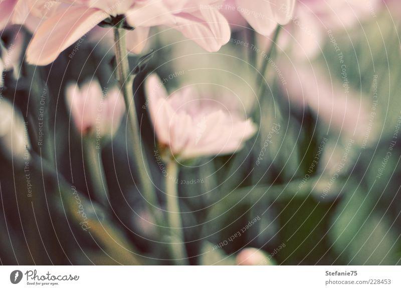 Natur grün schön Pflanze Sommer Freude Blume Blatt Farbe Gefühle Glück Frühling rosa Design frisch ästhetisch