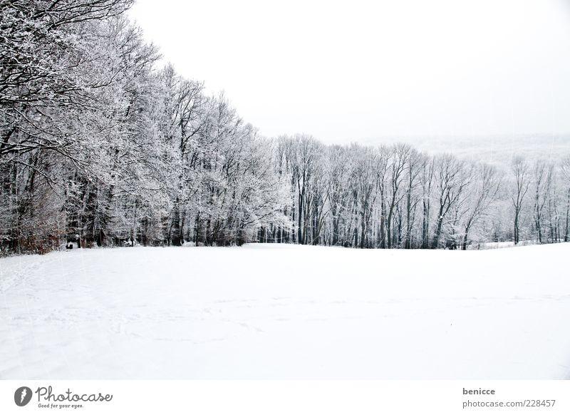 Lichtung Wald Waldlichtung Winter Schnee Baum kalt Natur Menschenleer Panorama (Aussicht) Panorama (Bildformat) Reihe Schneelandschaft Winterwald Waldrand