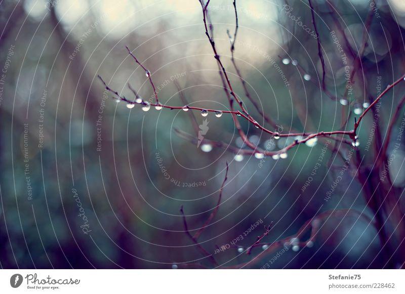 Natürliche Tränen Natur Pflanze Urelemente Wassertropfen Winter Regen Baum Sträucher Geäst Garten ästhetisch elegant frisch schön kalt nass natürlich Gefühle