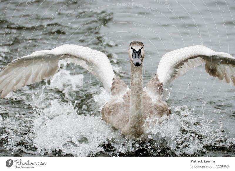 safe landing Natur Wasser weiß schön Tier Umwelt grau Kopf elegant fliegen Wassertropfen Wildtier Flügel Urelemente Neugier nah