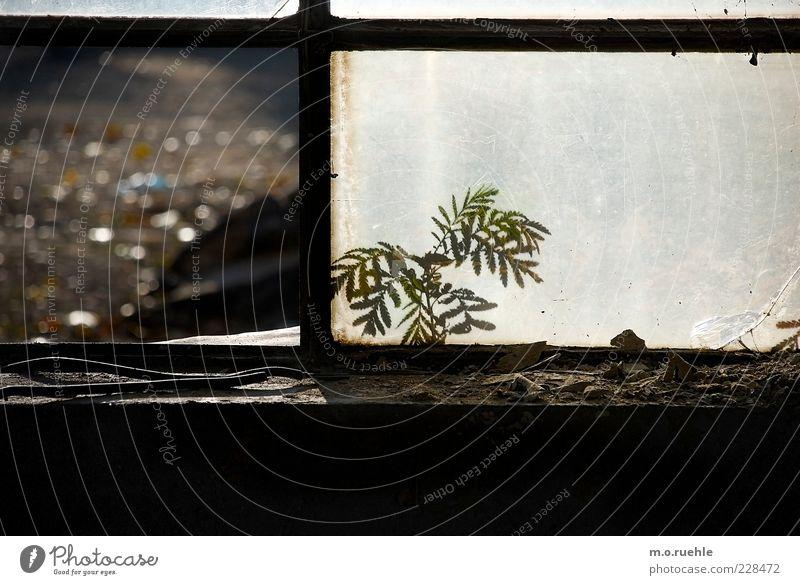 draußen vor dem fenster schön Pflanze Fenster Holz Kraft Glas ästhetisch kaputt niedlich Fabrik Verfall Lebensfreude Farn zerbrechlich Industrieanlage