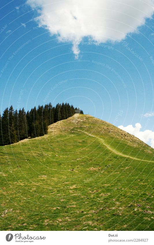 Hörnle Natur Landschaft Himmel Wolken Gras Wiese Wald Alpen Berge u. Gebirge Gipfel wandern blau grün Wege & Pfade Ziel Steigung Bayern alpin besteigen Fußweg