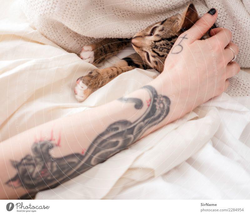 414 [two cats] Häusliches Leben Junge Frau Jugendliche Erwachsene Haut Arme Hand Jugendkultur Subkultur Tattoo Haustier Katze Krallen Pfote Tier Zeichen feminin