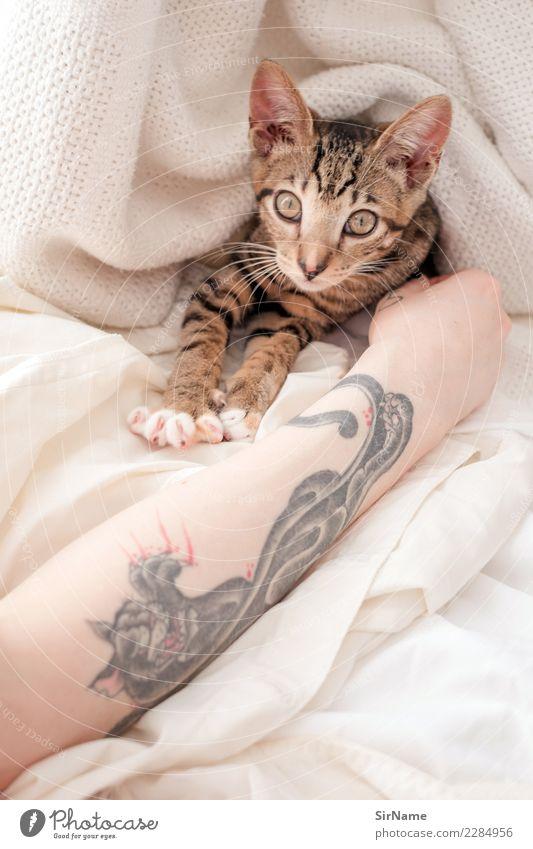 413 [two cats] Haut Häusliches Leben Junge Frau Jugendliche Erwachsene Arme Subkultur Tattoo Katze Pfote Tier beobachten berühren liegen Spielen streichen