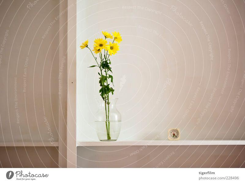 """Stillleben mit Margeriten gelb Korbblütengewächs Gänseblümchen Blume Pflanze Vase Wasser Uhr zuschauen sechs Regal Zirkel Teilung noch Leben """"""""Stillleben"""""""""""""""