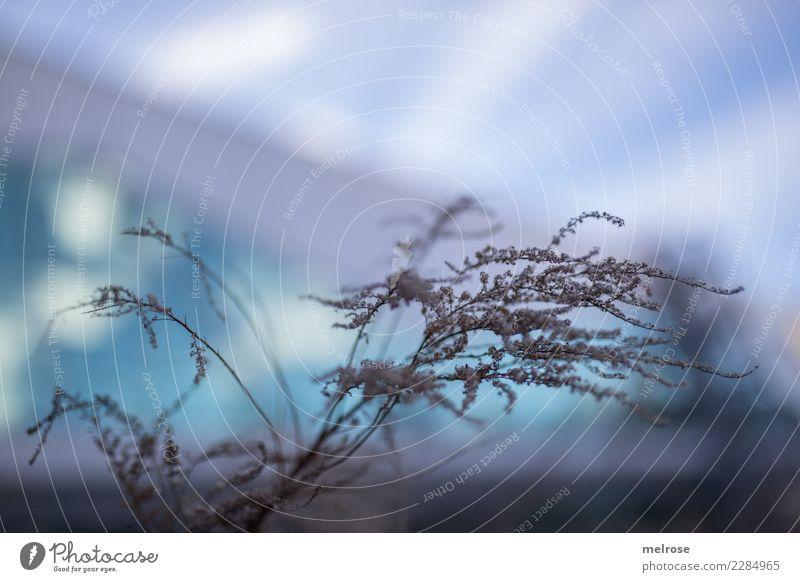 Strauch wirr warr Umwelt Himmel Winter Wetter Pflanze Sträucher Wildpflanze Zweige u. Äste Blüten Pastellton Strauch-wirr-warr Glasscheibe Reflektion Lichtpunkt