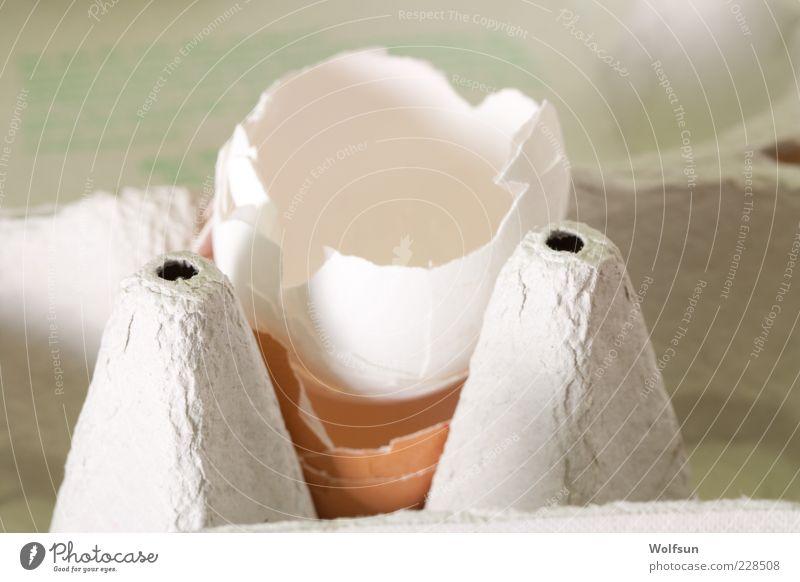 Eier sind aus Lebensmittel Ernährung Bioprodukte Verpackung kaputt grau weiß Farbfoto Innenaufnahme Nahaufnahme Schwache Tiefenschärfe Zentralperspektive