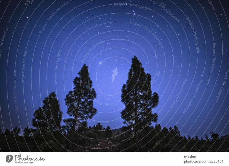 Nachthimmel Natur Pflanze Himmel Wolkenloser Himmel Stern Frühling Schönes Wetter Baum Sträucher kalt blau braun schwarz weiß Sternenhimmel Venus Pinie Farbfoto