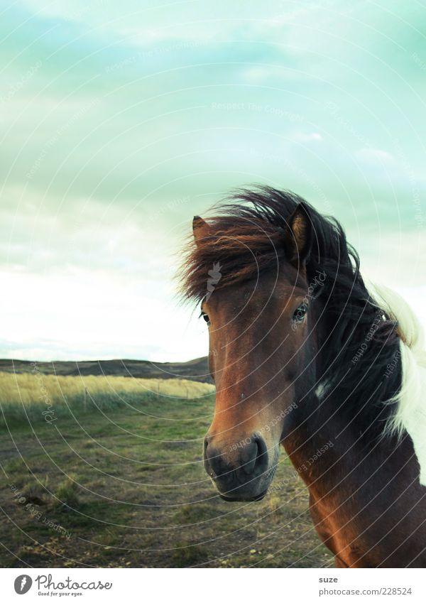 Blick am Samstag Himmel Natur Tier Wolken Landschaft Wiese natürlich Wind Wildtier wild warten stehen ästhetisch Pferd Freundlichkeit Tiergesicht