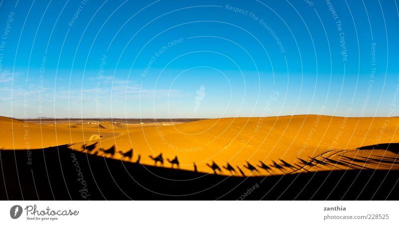 Karawane Umwelt Landschaft Sand Himmel Horizont Klima Schönes Wetter Wärme Dürre Wüste Sahara Abenteuer Bewegung entdecken erleben Ferien & Urlaub & Reisen