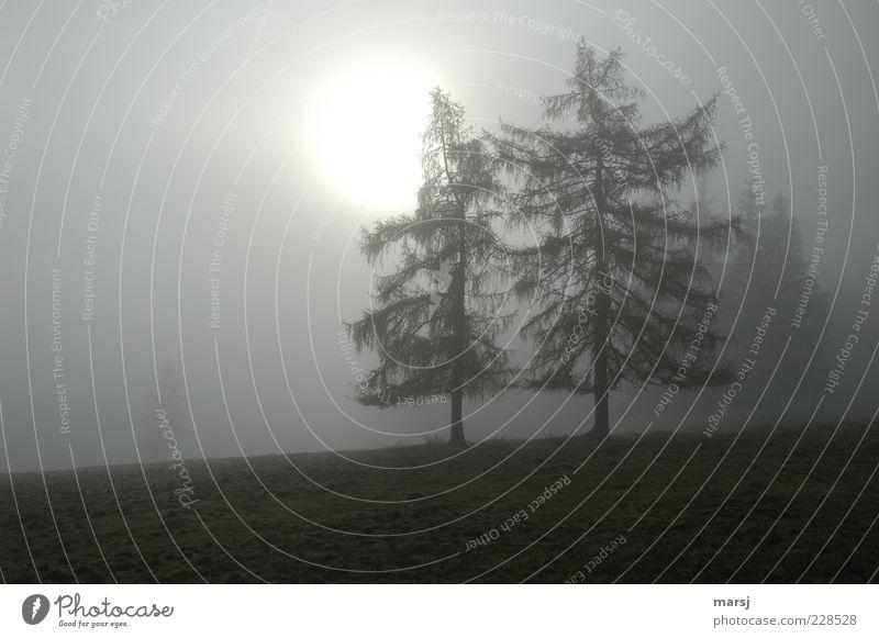 Novembernebel Natur Herbst schlechtes Wetter Nebel Baum Feld Wald beobachten frieren stehen träumen Traurigkeit verblüht warten alt bedrohlich dunkel einfach