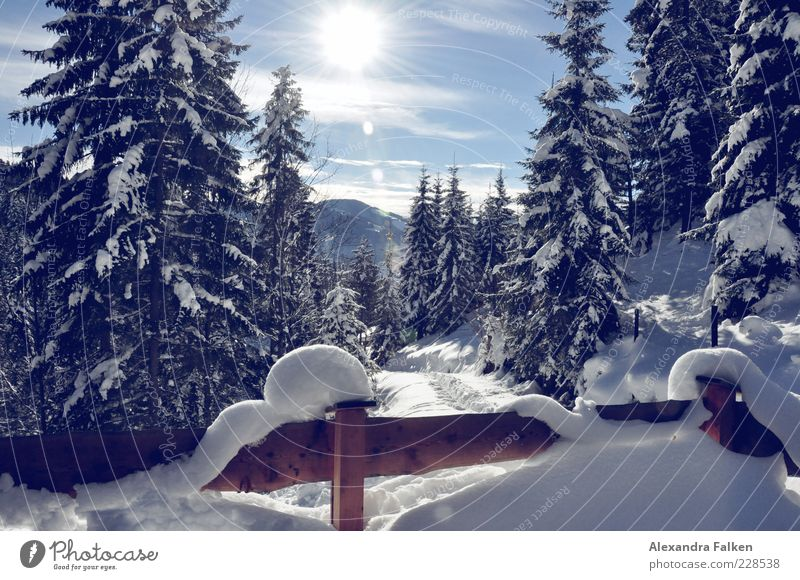 Schnee mit Sonne III. Umwelt Natur Landschaft Pflanze Himmel Sonnenlicht Winter Klima Wetter Schönes Wetter Tanne Nadelbaum Wald Alpen Berge u. Gebirge kalt