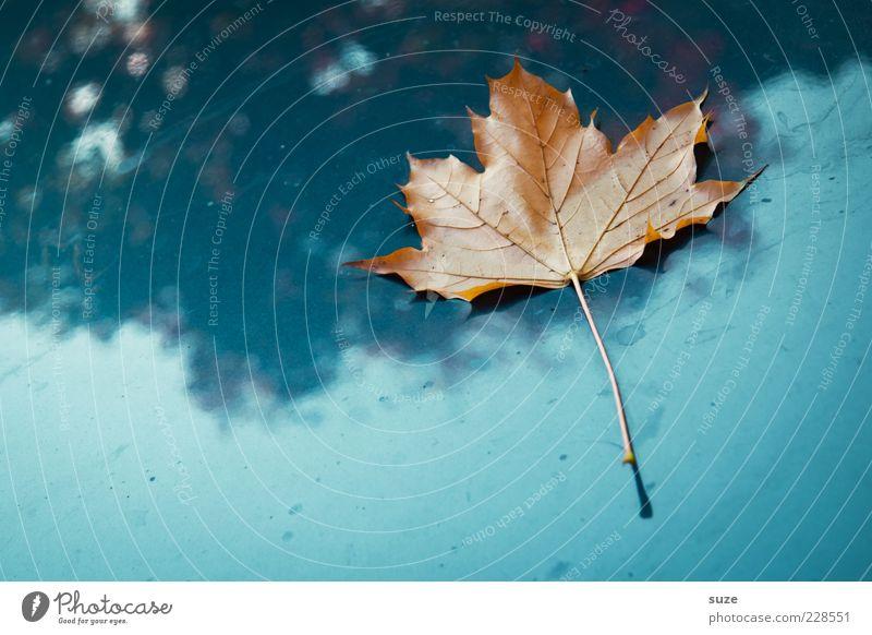Sonntagsblatt Natur alt blau schön Pflanze Blatt Einsamkeit Herbst Wetter Zeit ästhetisch einzeln Stengel Jahreszeiten Herbstlaub vertrocknet