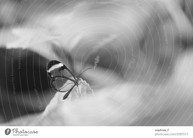 Schmetterling Tier 1 Erholung ästhetisch außergewöhnlich exotisch klein nah Zufriedenheit Tapferkeit Kraft Tierliebe ruhig Sehnsucht Einsamkeit elegant