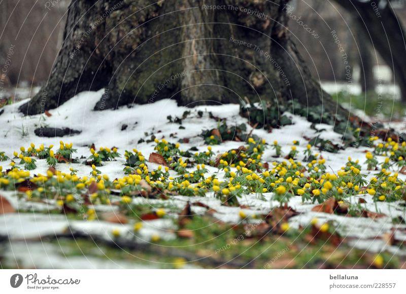 Kampfgeist Natur schön Baum Pflanze Winter gelb Wiese Schnee Umwelt Landschaft Garten Park Eis Erde Frost Blühend