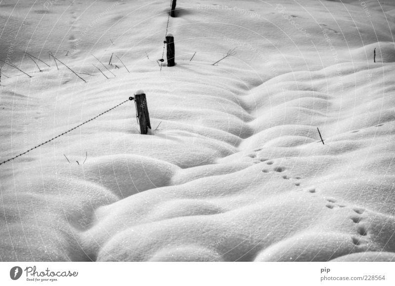 gespurt Natur Winter Klima Eis Frost Schnee frei kalt wild Spuren Schneedecke weich Zaun Zaunpfahl Schwarzweißfoto Außenaufnahme Detailaufnahme Menschenleer