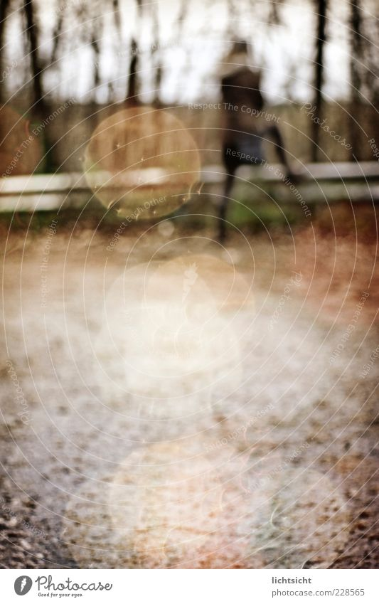 lost Mensch Baum Blatt Einsamkeit Wald Straße Herbst Wege & Pfade Regen braun Wetter gefährlich stehen Asphalt geheimnisvoll Aussicht