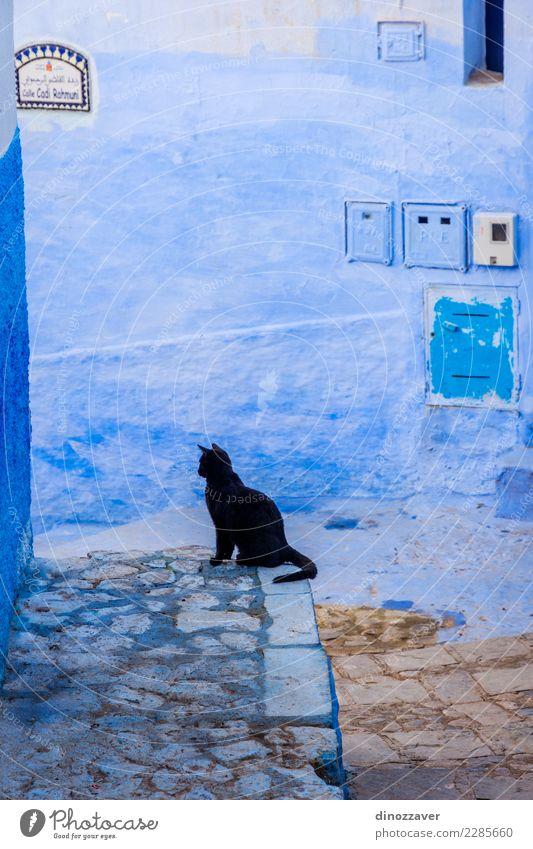 Schwarze Katze in der blauen Stadt, Chefchaouen alt Farbe Haus schwarz Straße Architektur Gebäude Treppe sitzen Kultur Dorf Tradition Afrika