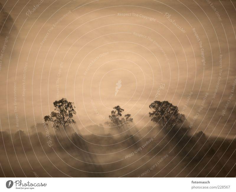 Morgennebel Natur Landschaft Pflanze Luft Sonnenaufgang Sonnenuntergang Wetter Nebel Baum Feld entdecken Erholung fliegen grau Umwelt Gedeckte Farben