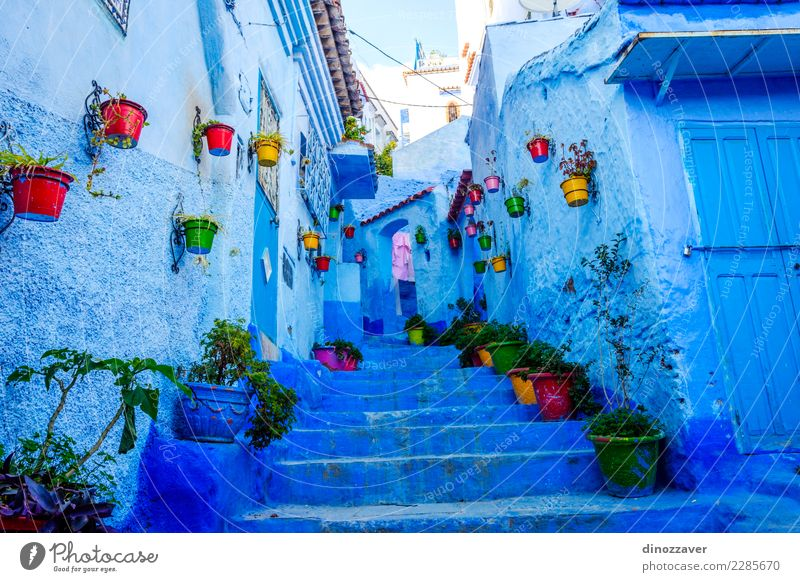 Blaue Straße in Chefchaouen, Marokko Topf Ferien & Urlaub & Reisen Tourismus Berge u. Gebirge Haus Kultur Pflanze Blume Dorf Stadt Gebäude Architektur Treppe