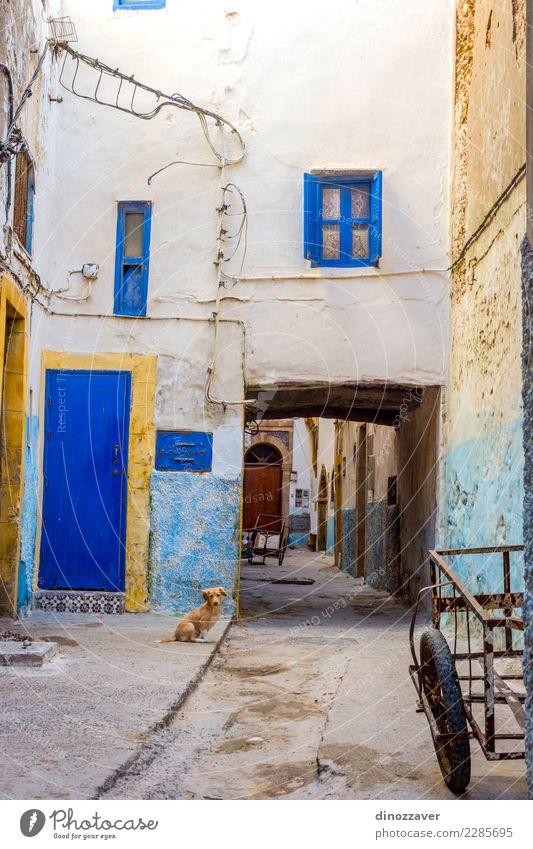 Welpe an der Straße, Essaouira Himmel Natur Ferien & Urlaub & Reisen Sommer Farbe Sonne Meer Erholung Tier Strand gelb Küste Tourismus Sand Ausflug Aktion