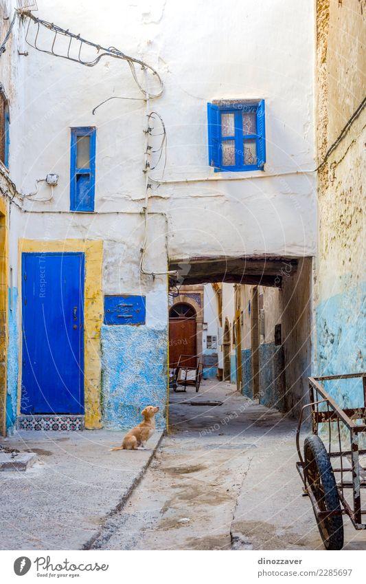 Welpe an der Straße, Essaouira Ferien & Urlaub & Reisen Tourismus Haus Kultur Tier Stadt Gebäude Architektur Hund alt niedlich blau Farbe Marokko Afrika Medina