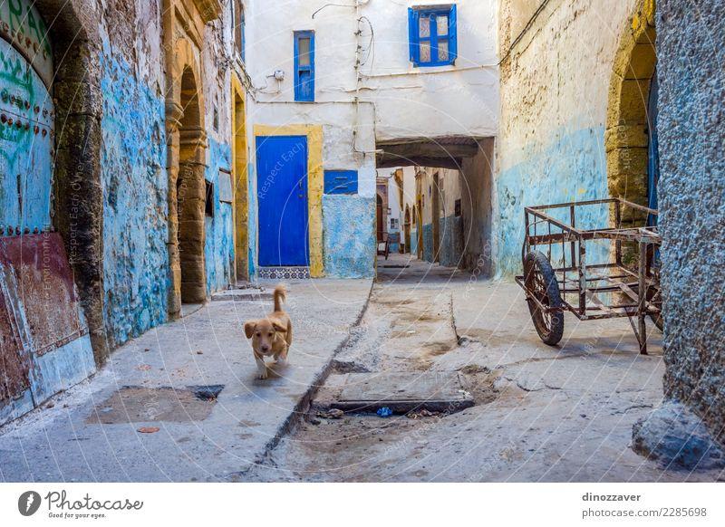 Ferien & Urlaub & Reisen Hund alt blau Stadt Farbe Haus Tier Straße Architektur Gebäude Tourismus Kultur niedlich Bürgersteig Afrika