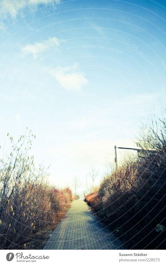 ^ Landschaft hell Herbst Fußweg Bürgersteig Straßennamenschild Wolkenhimmel Sträucher Himmel geradeaus himmelwärts Farbfoto Menschenleer Textfreiraum oben Licht