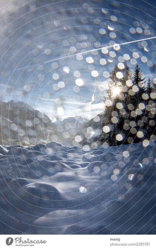 Tröpfchenzauber Leben harmonisch ruhig Ausflug Winter Schnee Winterurlaub Natur Schönes Wetter Eis Frost außergewöhnlich fantastisch einzigartig kalt blau Glück