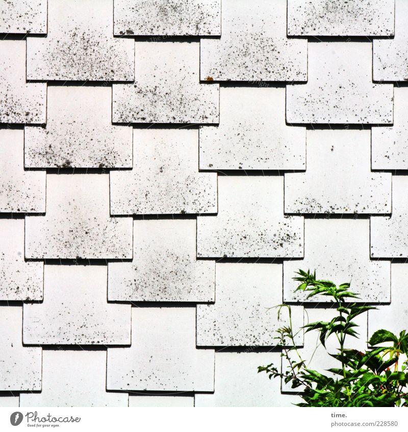 Hardchor mit Solo Pflanze Menschenleer Dach Wachstum ästhetisch hell grau grün weiß Sicherheit Schutz gleich Dachziegel Glätte ähnlich parallel Gegenteil