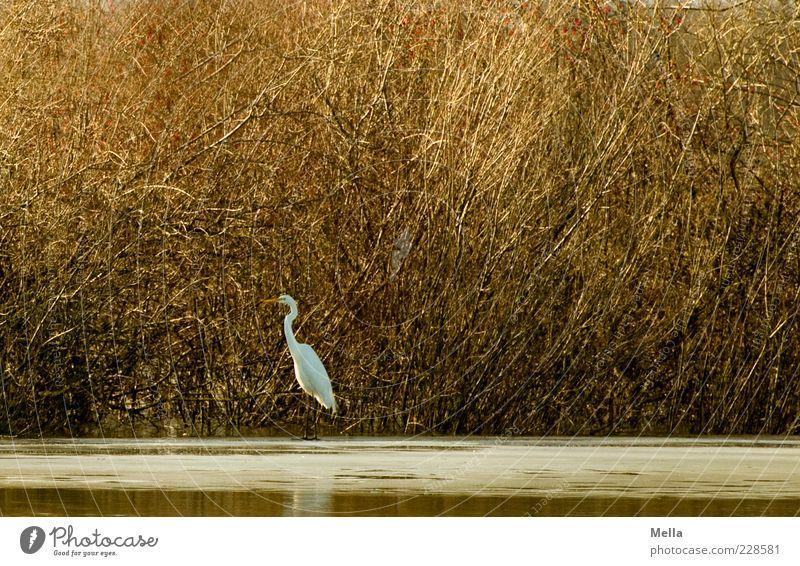 Last Bird Standing Natur Pflanze ruhig Tier Umwelt Freiheit Küste See braun Vogel frei natürlich Wildtier stehen Sträucher Idylle