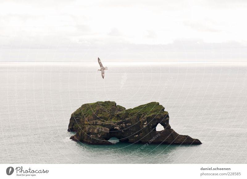 rechts das Auge und die Nase... Umwelt Natur Wasser Himmel Wellen Küste Meer Insel Vogel 1 Tier hell Island Skandinavien fliegen Horizont Textfreiraum links