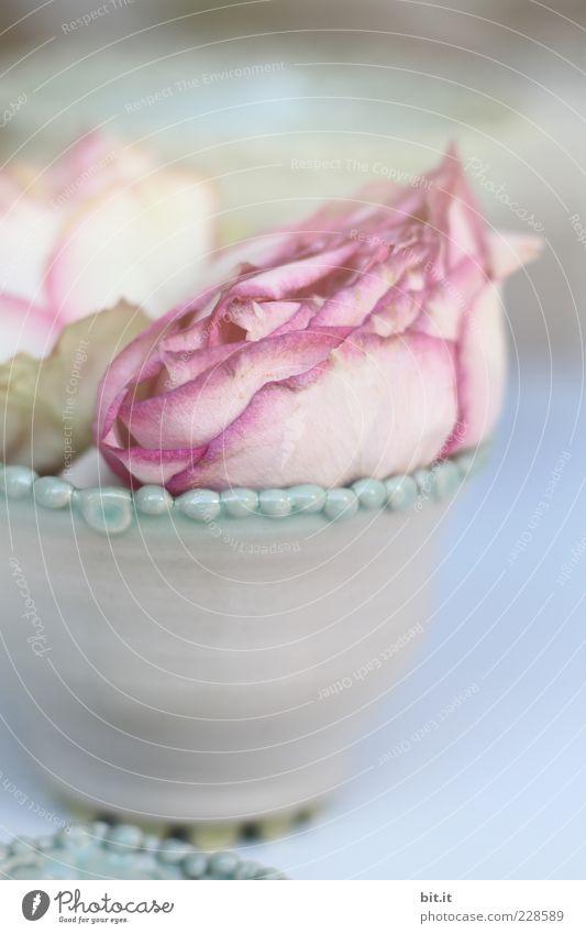 Rosenduft... Blume Erholung Blüte Feste & Feiern rosa Häusliches Leben Dekoration & Verzierung Blühend Romantik Kitsch Blumenstrauß Meditation Stillleben Perle